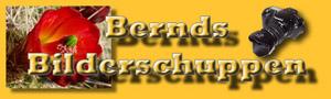 Bernds neuer Bilderschuppen